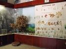 Историко-краеведческий музей Армянска